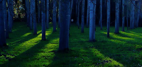 light shadow sun france tree nature grass seine sombre et marne seineetmarne conchessurgondoire