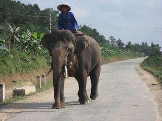 Tomb of Tự Đức 的形象. elephant vietnam 2007 hué tomboftuduc