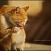cat by علي الحسين