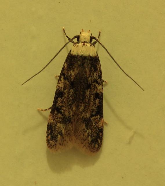 Moth On The Closet Flickr Photo Sharing