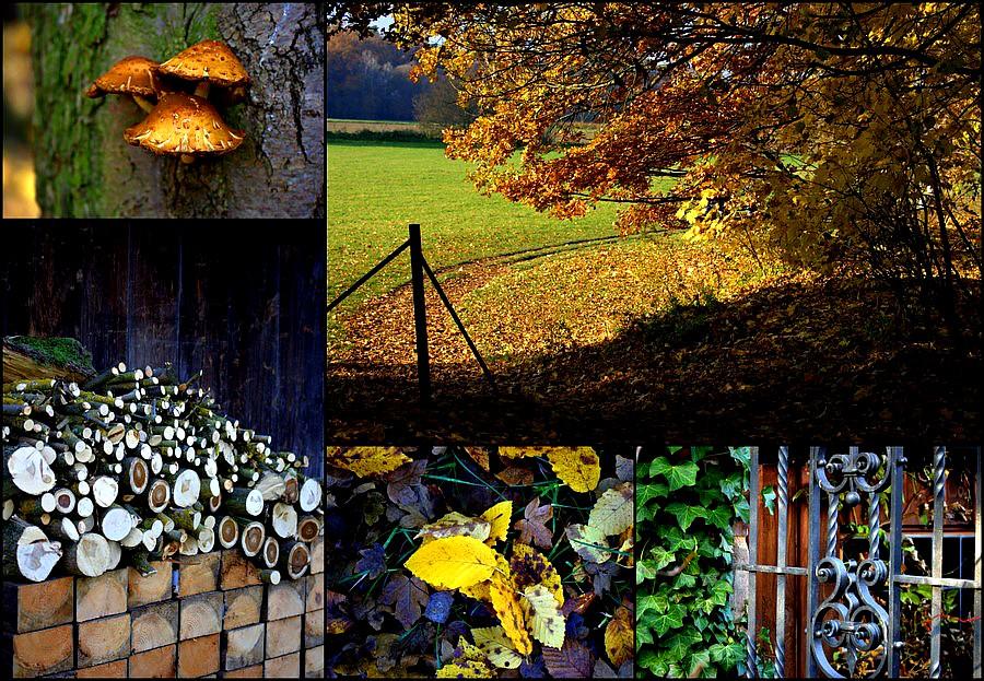 Herbst 2011 (Stein)