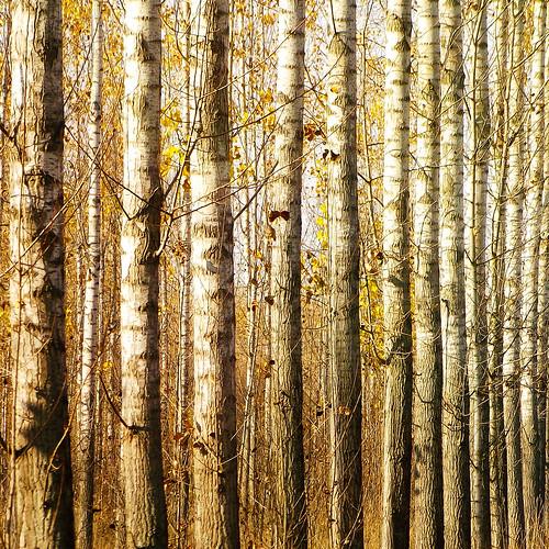 autumn tree forest hungary fa kirándulás magyarország ősz erdő csengele