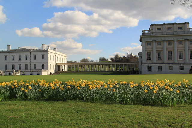 Daffodils in Greenwich