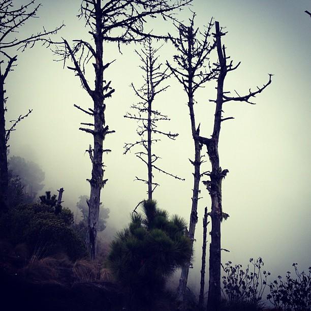 Walking on clouds (almost). #acatenango #guatemala