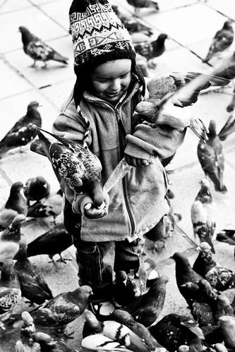 [フリー画像素材] 人物, 子供 - 男の子, 鳥類, 人物 - 動物, 鳩・ハト, モノクロ ID:201203241200