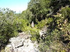 Sur le sentier vers Bocca d'Alzeta Longa : le début des obstacles résultant des tempêtes d'hiver