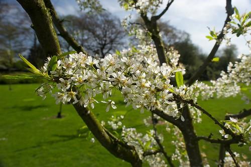 Operation Farm - Hyde Park Community Orchard