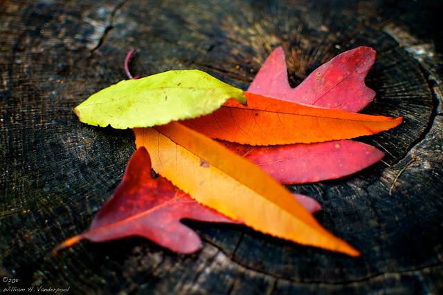 Norah's Leaves