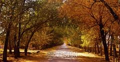 Fall way.