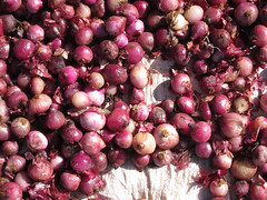 plant(0.0), vegetable(1.0), onion(1.0), red onion(1.0), shallot(1.0), produce(1.0), food(1.0),
