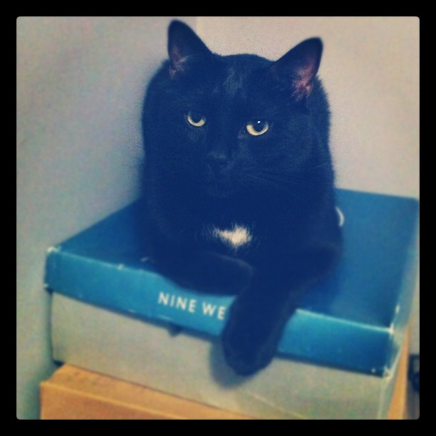 Stanley lounging on shoe boxes