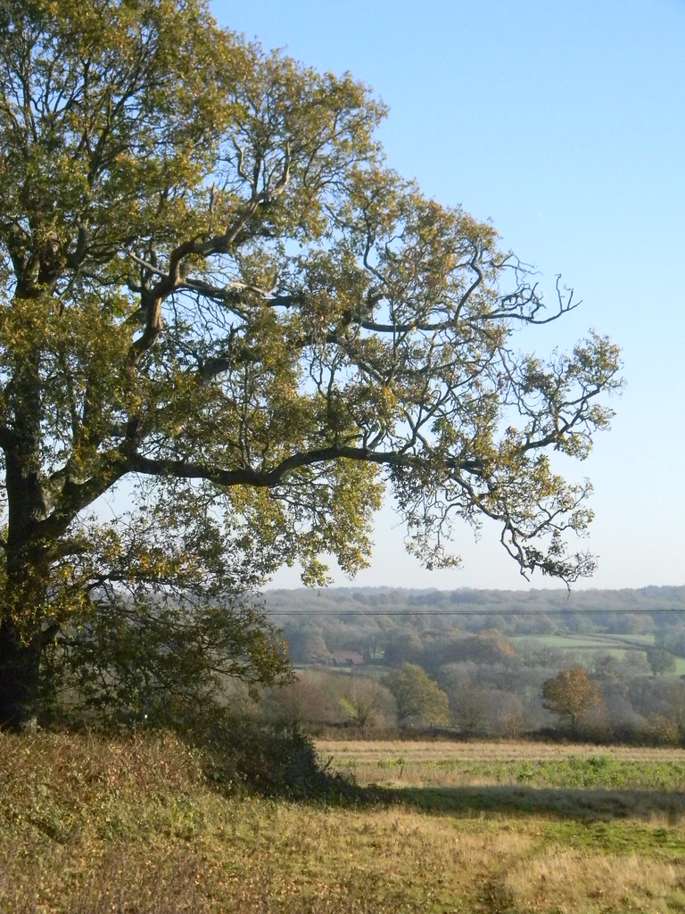 View with tree Buxted Circular