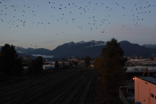 Crow path