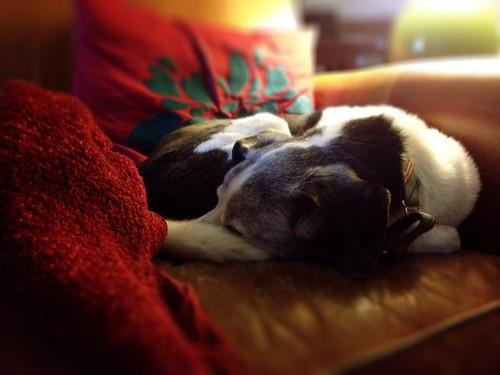 sleepy sleeperson