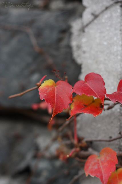 yapraklar_4