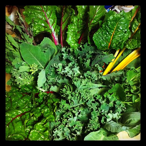Lots of harvested Greens: Collards, various Kales, Gailaan, Broccoli Raab, Swiss Chard and Beet Greens