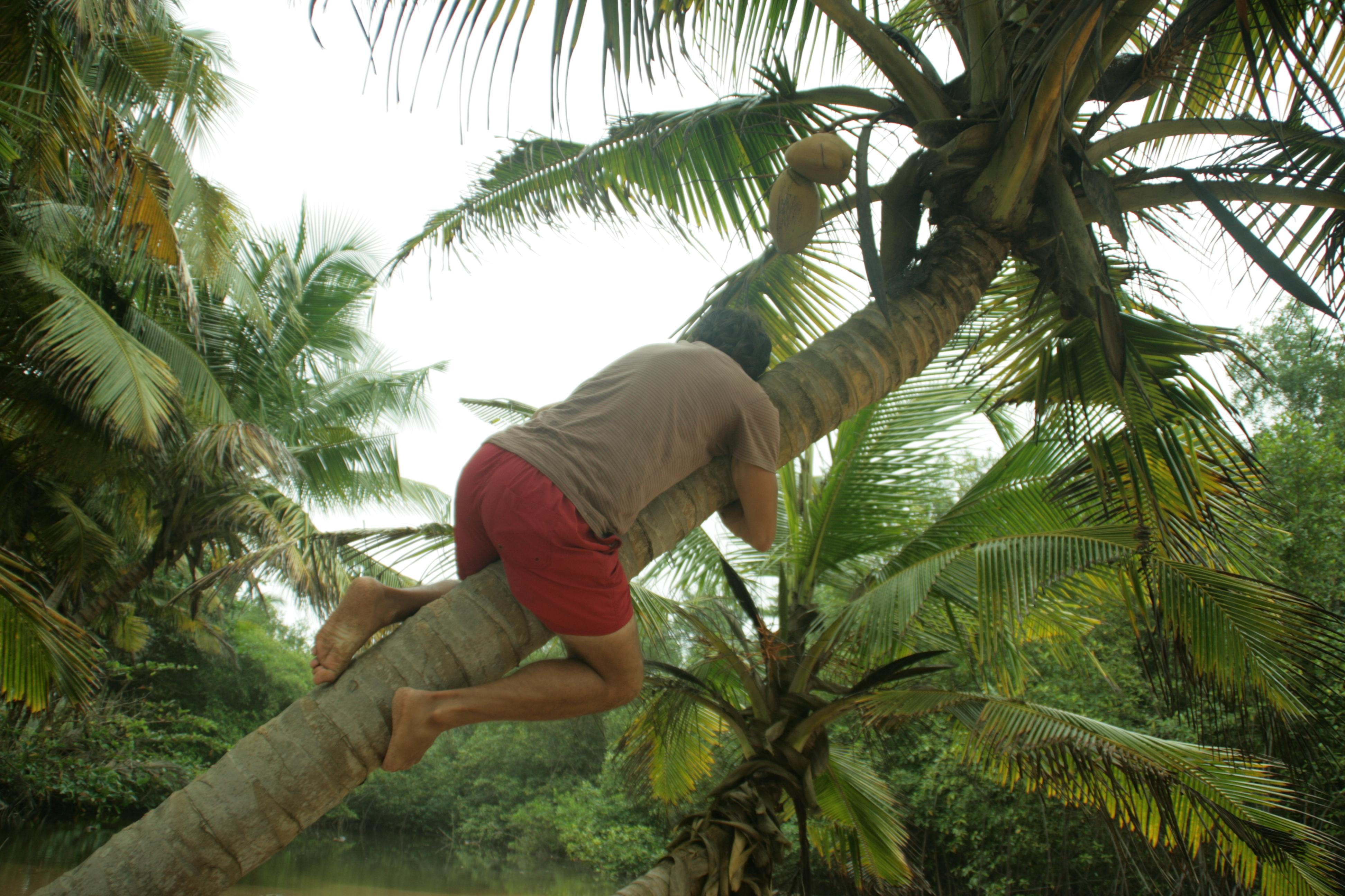 Com agafar un coco 2