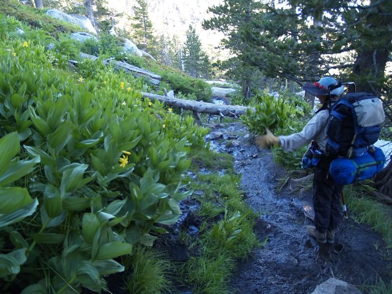 Deer Springs Trail swampy stream crossing at Lily Spring