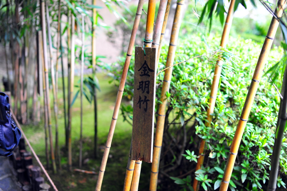 Beautiful greenery  with the bamboo