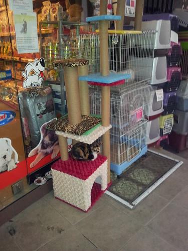 Tesztpilóta a háziállat boltban