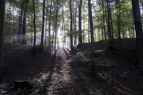 Belgie - zonienwoud