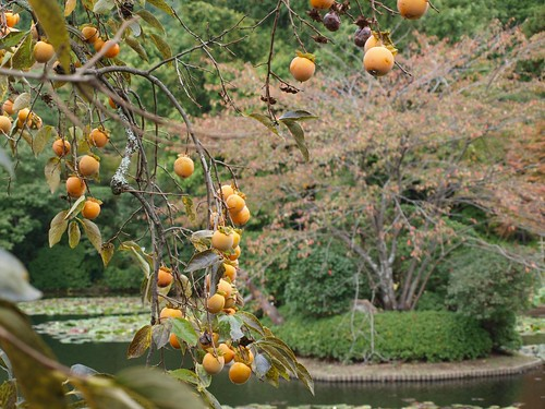 Ryoanji: Zen Rock Garden by girl from finito