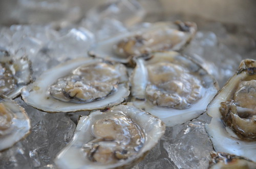 Raw oysters staged deliciously