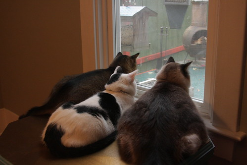 Bird and Squirrel watching