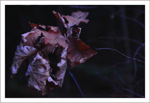 nature automne soleil photos couleurs arbre froid forêt flou feuilles repos tempête photographe rencontres visiteurs chêne parcdelagatineau gatineauqc nikond300 lavidaenfotografia photoquebec gatineauaylmerqc simpa©