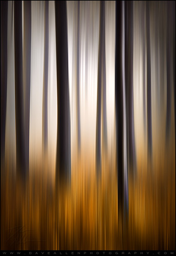 lighting longexposure autumn trees light orange abstract motion blur mountains fall nature grass vertical forest landscape outdoors photography golden photo moving nc blurry woods nikon exposure seasons natural artistic fineart dream deep northcarolina blurred foliage motionblur fantasy carolina dreamy tall pan trunks panning technique blueridgeparkway blueridge dreamscape daveallen appalachians wnc westernnorthcarolina southernappalachians d700 verticalpanning mygearandme mygearandmepremium mygearandmebronze mygearandmesilver mygearandmegold mygearandmeplatinum mygearandmediamond