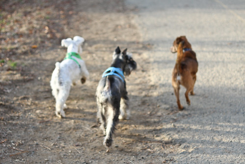 Running with the Dogs