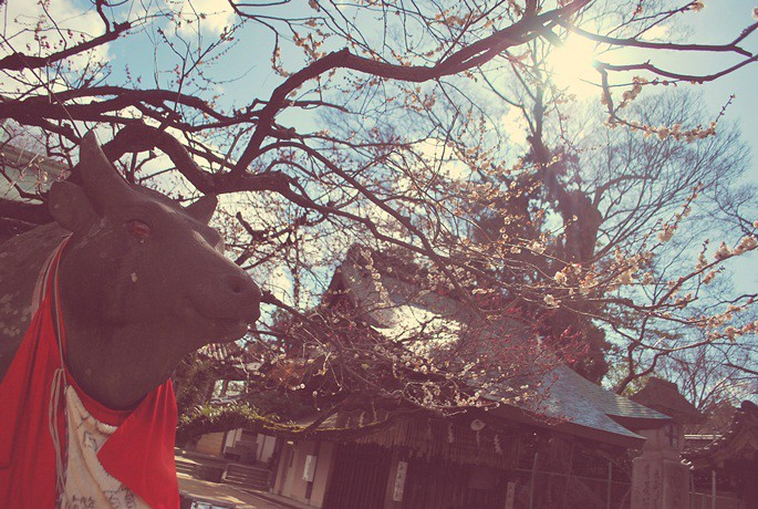 Kyoto februari 2011