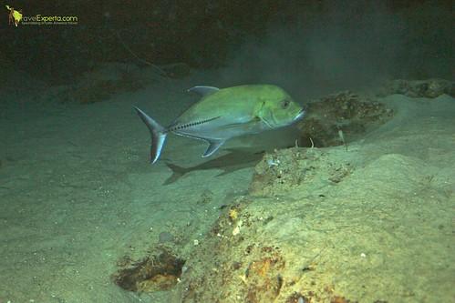 Marine 1500 Feet Below Sea Level Deep Sea Exploration Deep Sea Exploration Passenger Submarine Roatan Honduras