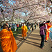 Cherry Blossom Festival, Washington D.C.
