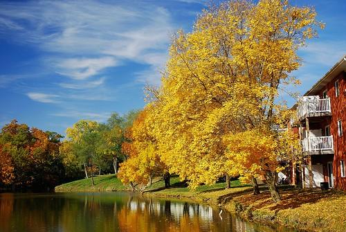 autumn trees reflection fall colors leaves season pond apartments view balcony iowa overlook iowacity drawofdistance