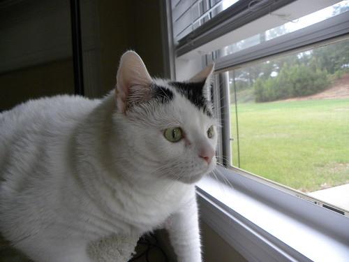 cats blackwhite blackwhitecat