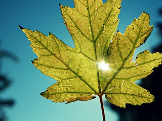 Lightened Leaf
