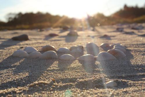 light sunset sun beach water set dark angle low experiment bivalvia