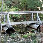 Sphagnum Bog Bridge, Greenbrook Sanctuary, Tenafly, New Jersey
