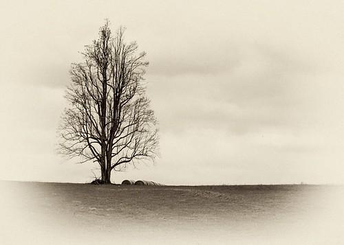 trees monochrome landscapes photoart treemendous myartisticcreations bwsmonochromes monosepia spartacuseyeswithoutchains afsdxvrzoomnikkor18200mmf3556gifedii digitalartistsphotoart