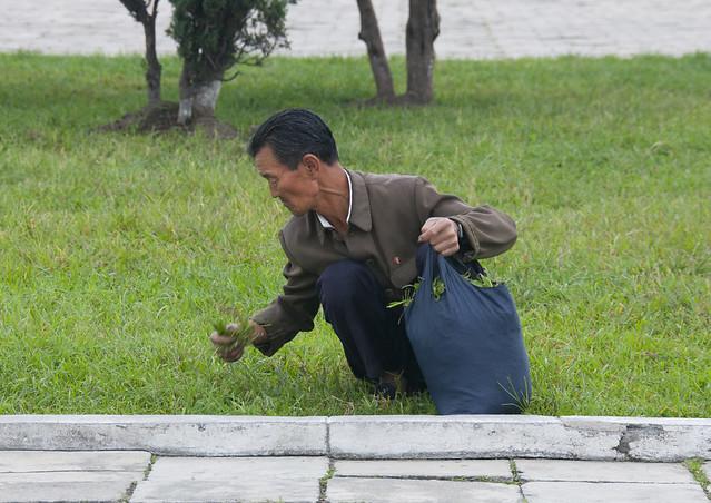 Collecting herbs - Wonsan North Korea