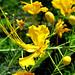 Flores de Juchitán-2 por fernandodelatorre46