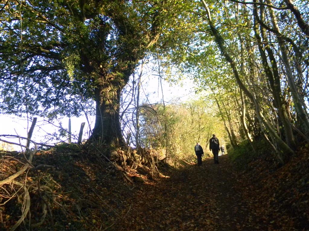 Autumnal bridleway New Addington to Hayes