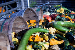 Indian Ladder Farms - Altamont, NY - 2010, Oct - 11.jpg by sebastien.barre