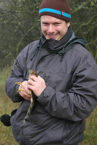 Sparrowhawk + ringer