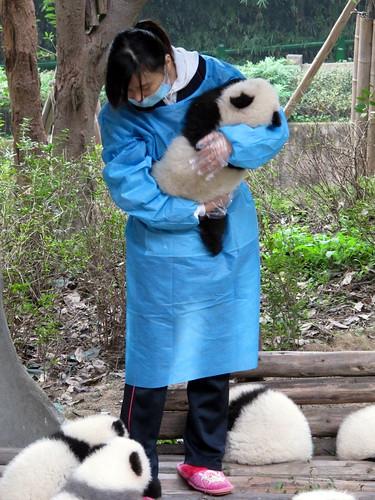 Panda nurse