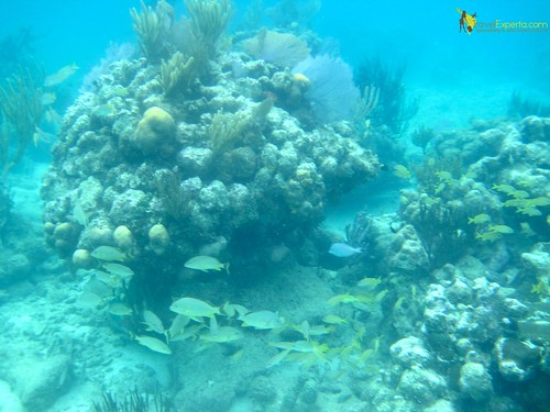 second largest barrier reef in the world roatan honduras marine life