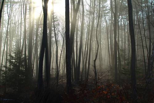 morning home sunrise woods foggy