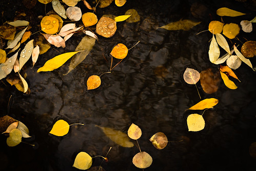 autumnal | pool of self-remembering | canon 7d