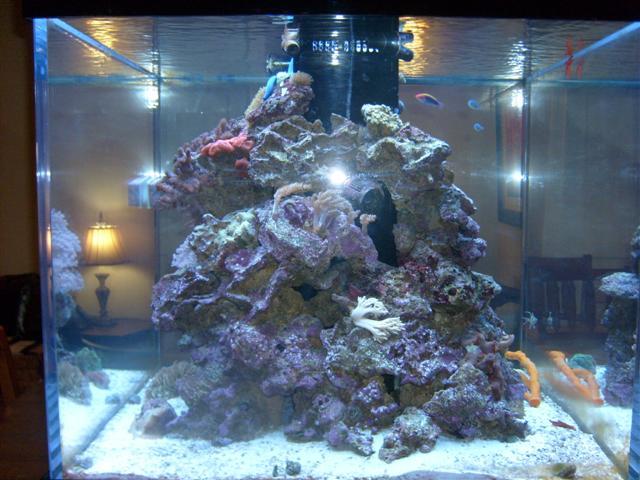 Custom Aquarium Mo Flickr Photo Sharing
